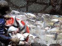 Thu hồi hơn 800 sản phẩm thủy sản của 72 doanh nghiệp