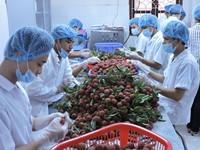 Trái cây Việt Nam xuất khẩu vào nhiều thị trường khó tính tăng hơn 80