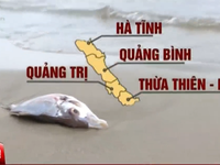 Mưa đá, giông lốc, cá chết: Bình thường hay bất thường?