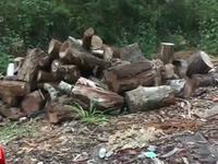 Có hay không việc tiếp tay cho lâm tặc phá rừng phòng hộ ở Lâm Đồng?