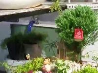 Vườn trong chai - Thú chơi tao nhã mới cho người yêu thiên nhiên