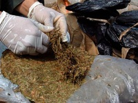Mỹ và Colombia thu giữ 1,5 tấn cocaine
