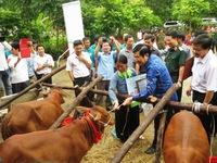 Chủ tịch nước hoan nghênh sáng kiến tặng bò cho người nghèo