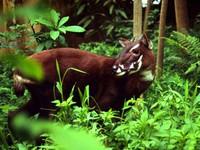 Tăng cường bảo tồn động vật hoang dã nguy cấp, quý, hiếm