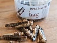 Thực phẩm côn trùng được ưa chuộng tại châu Âu