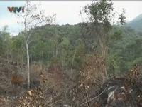 Phú Yên: Lâm tặc ngang nhiên xẻ thịt rừng, hầm than