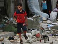 Những ngày yên bình của người dân ở Dải Gaza