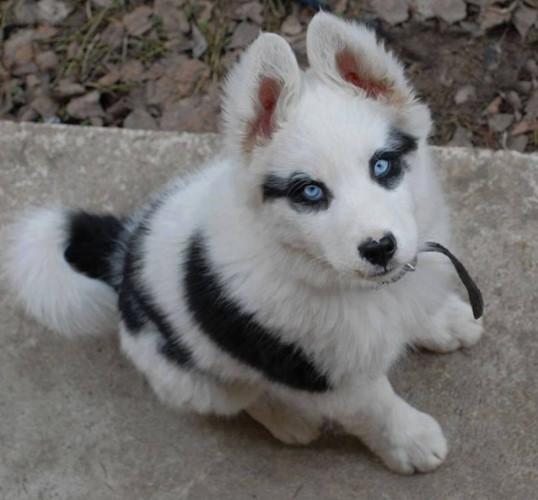 Ngắm những chú chó có bộ lông đặc biệt nhất thế giới - Ảnh 1.