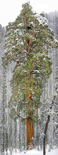 Ngỡ như lạc vào xứ thần tiên với những loài cây đẹp nhất hành tinh - Ảnh 10.
