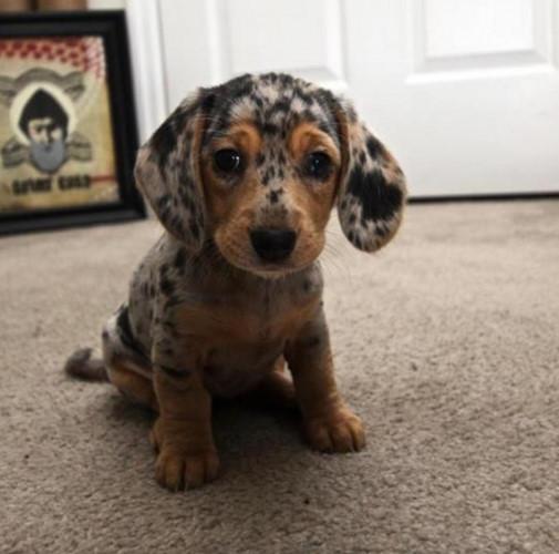 Ngắm những chú chó có bộ lông đặc biệt nhất thế giới - Ảnh 2.
