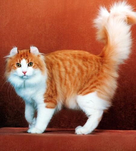 Chiêm ngưỡng những giống mèo đắt tiền nhất hành tinh - Ảnh 14.