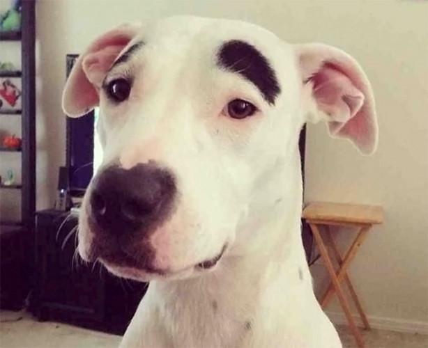 Ngắm những chú chó có bộ lông đặc biệt nhất thế giới - Ảnh 5.