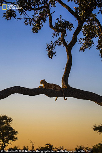 Thiên nhiên hoang dã đẹp mê hoặc trong ảnh của National Geographic - Ảnh 6.