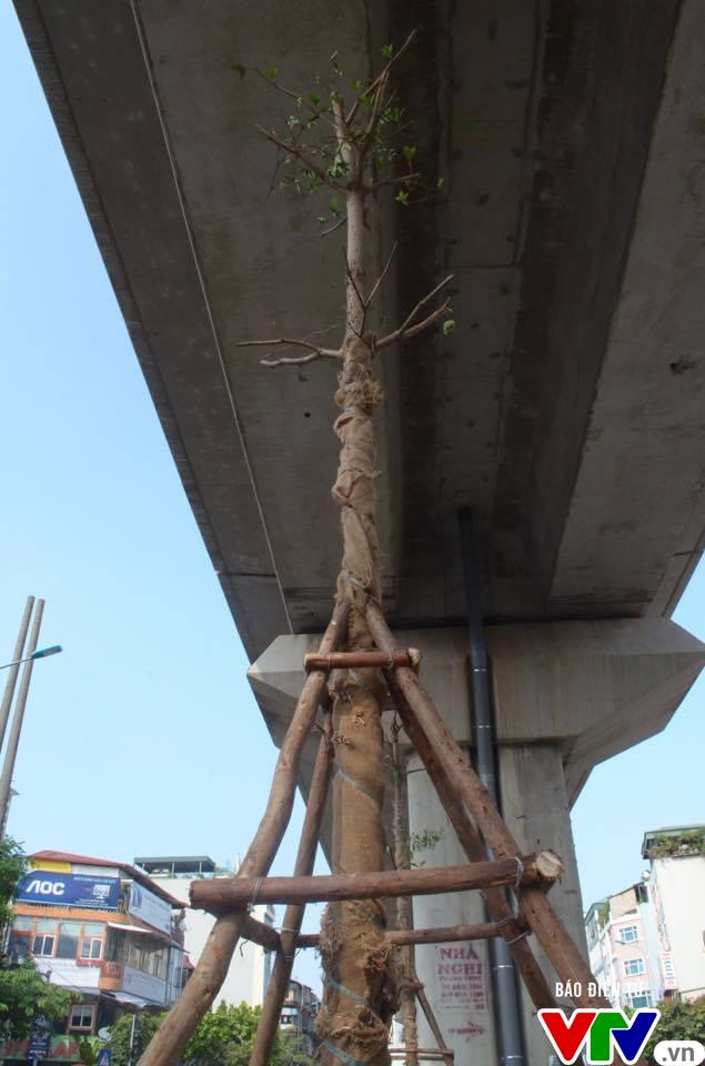 Trồng cây dưới đường sắt trên cao nhiều nước đã làm và là chuyện bình thường - Ảnh 2.