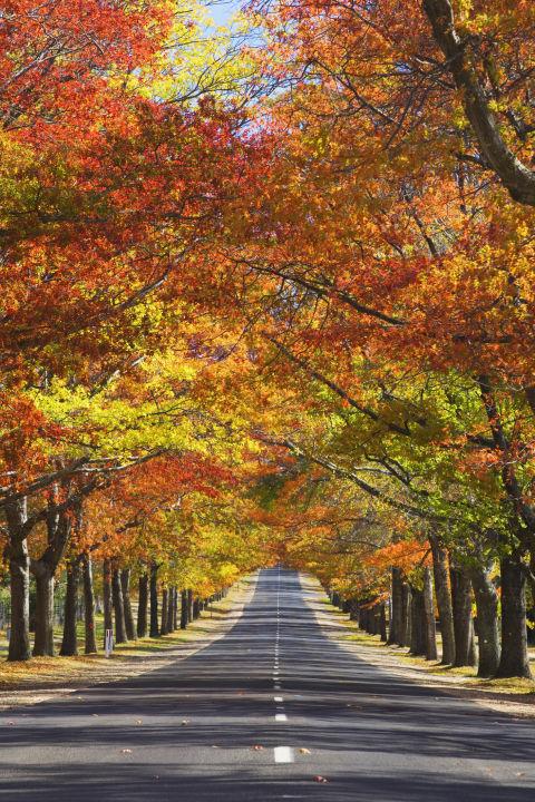 Nao lòng trước khung cảnh ngập tràn sắc lá thu trên thế giới - Ảnh 10.