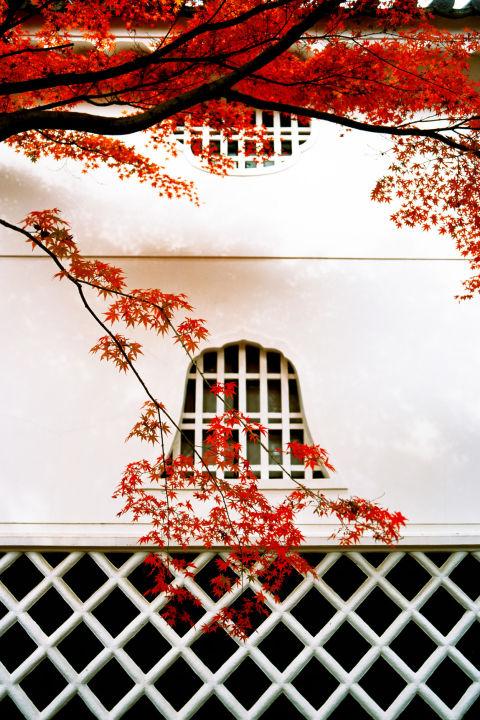 Nao lòng trước khung cảnh ngập tràn sắc lá thu trên thế giới - Ảnh 12.