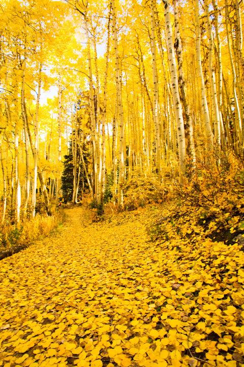 Nao lòng trước khung cảnh ngập tràn sắc lá thu trên thế giới - Ảnh 13.