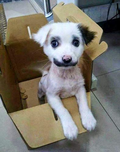 Ngắm những chú chó có bộ lông đặc biệt nhất thế giới - Ảnh 7.