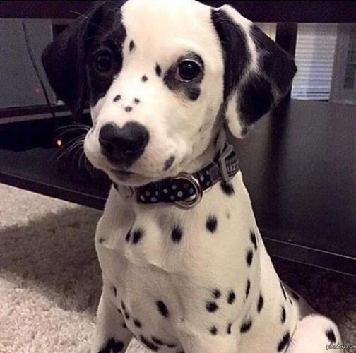 Ngắm những chú chó có bộ lông đặc biệt nhất thế giới - Ảnh 12.