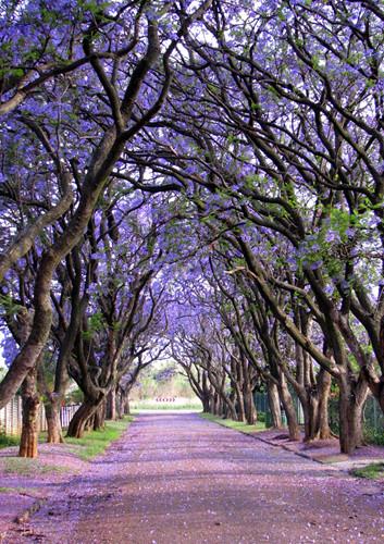 Ngỡ như lạc vào xứ thần tiên với những loài cây đẹp nhất hành tinh - Ảnh 7.