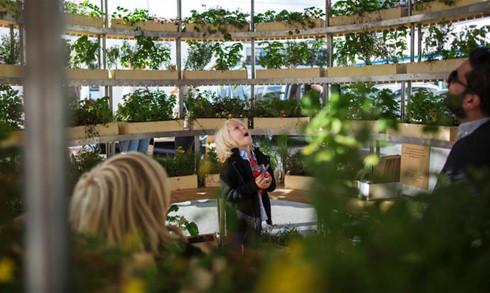 Trải nghiệm nhà sinh thái - kiến trúc xanh của tương lai - Ảnh 8.
