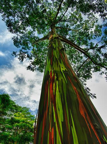 Ngỡ như lạc vào xứ thần tiên với những loài cây đẹp nhất hành tinh - Ảnh 8.