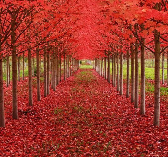 Ngỡ như lạc vào xứ thần tiên với những loài cây đẹp nhất hành tinh - Ảnh 9.
