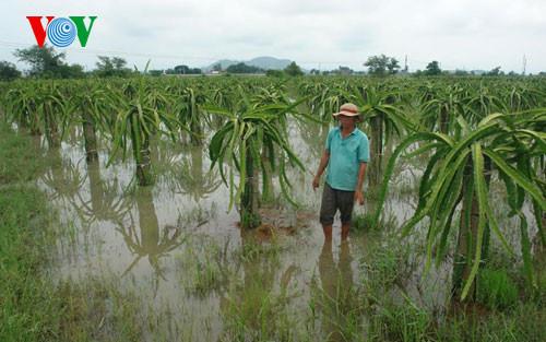 Mưa lớn tại Bình Thuận gây ngập cục bộ, tắc nghẽn  tuyến QL1A - Ảnh 1.