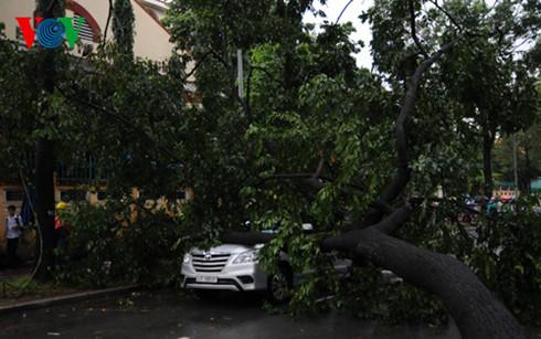 Liên tiếp 2 vụ cây gãy đổ, đè vào ô tô tại TP.HCM - Ảnh 1.