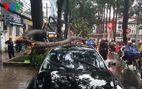 Liên tiếp 2 vụ cây gãy đổ, đè vào ô tô tại TP.HCM - Ảnh 2.