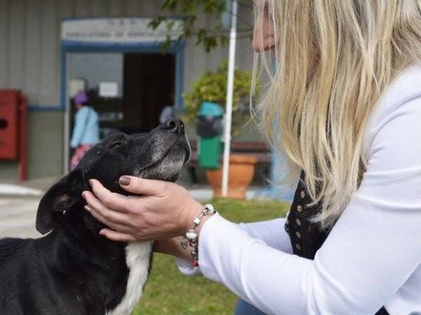 Chú chó đứng chờ trước cửa bệnh viện nơi chủ nhân đã qua đời 8 tháng trước - Ảnh 1.