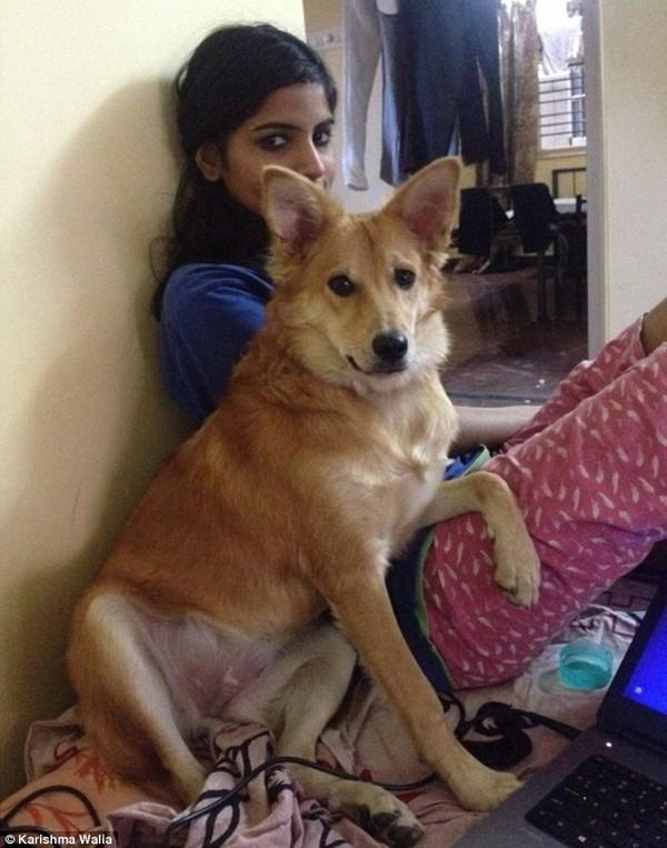 Ấn Độ: Chú rể bị cô dâu từ hôn vì... không thích chó - Ảnh 1.