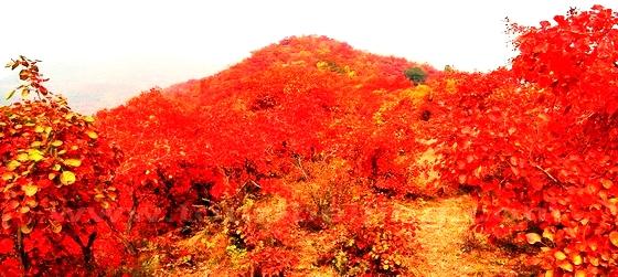 10 điểm ngắm mùa thu rực rỡ ở Trung Quốc - Ảnh 10.