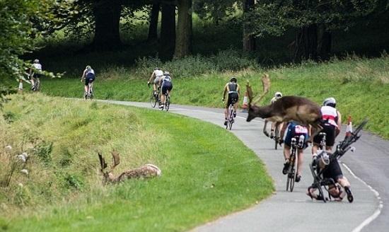 Tai nạn hy hữu trên đường đua xe đạp - Ảnh 2.