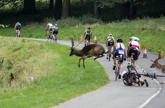 Tai nạn hy hữu trên đường đua xe đạp - Ảnh 3.