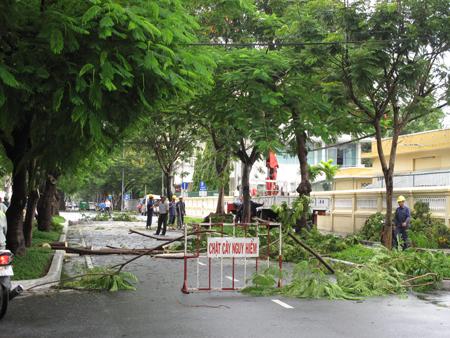 Khánh Hòa: Mưa khiến nhiều cây xanh ngã đổ, 1 tàu cá bị chìm - Ảnh 1.