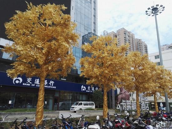 Hàng cây dát vàng gây tranh cãi ở Trung Quốc - Ảnh 2.