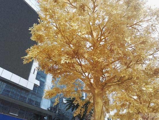 Hàng cây dát vàng gây tranh cãi ở Trung Quốc - Ảnh 4.