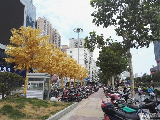 Hàng cây dát vàng gây tranh cãi ở Trung Quốc - Ảnh 5.