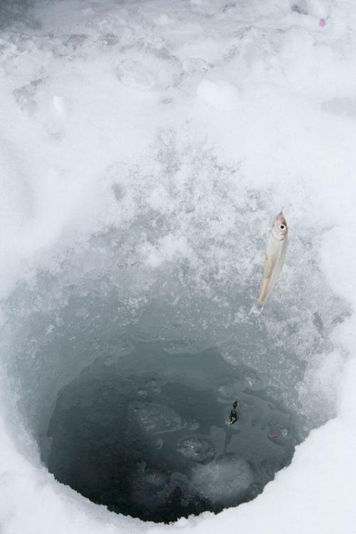 Câu cá trên băng hồ Haibara ở Nhật Bản - Ảnh 4.