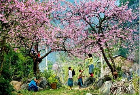 5 hành trình du lịch lý tưởng cho ngày giao mùa Đông - Xuân - Ảnh 2.