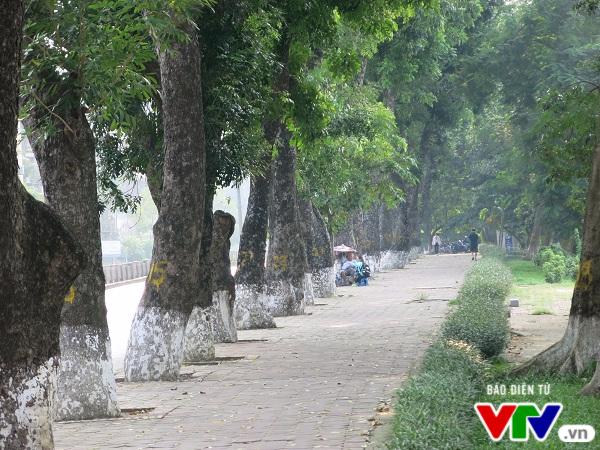 Hà Nội: Di chuyển hàng cây xanh phố Kim Mã, người dân tiếc hùi hụi - Ảnh 1.