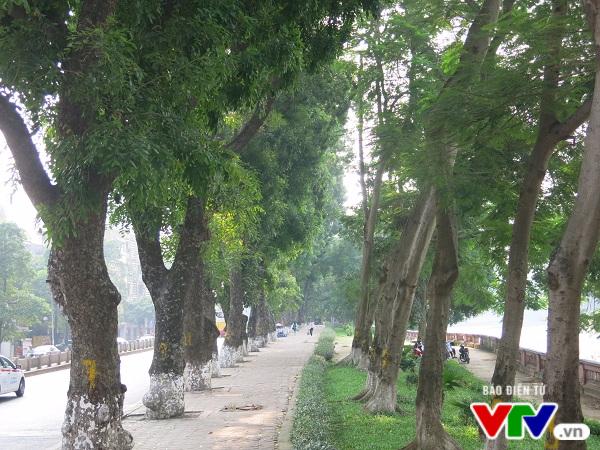 Hà Nội: Di chuyển hàng cây xanh phố Kim Mã, người dân tiếc hùi hụi - Ảnh 6.