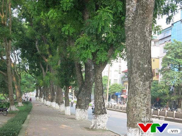 Hà Nội: Di chuyển hàng cây xanh phố Kim Mã, người dân tiếc hùi hụi - Ảnh 7.
