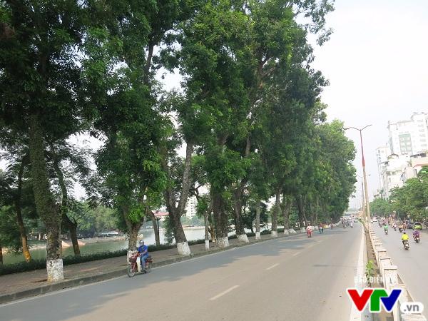 Hà Nội: Di chuyển hàng cây xanh phố Kim Mã, người dân tiếc hùi hụi - Ảnh 8.