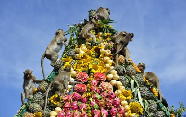 Tiệc buffet dành cho... khỉ ở Thái Lan - Ảnh 1.