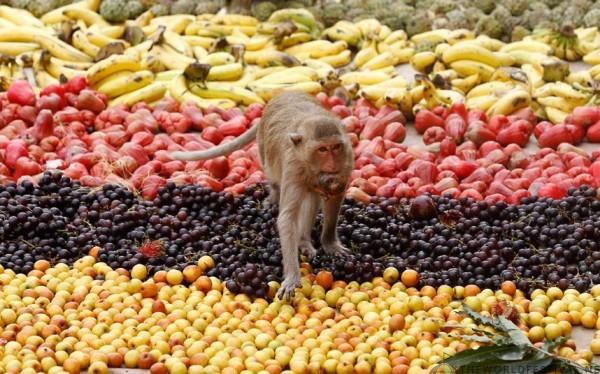 Tiệc buffet dành cho... khỉ ở Thái Lan - Ảnh 2.