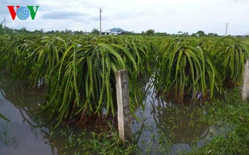 Mưa lớn tại Bình Thuận gây ngập cục bộ, tắc nghẽn  tuyến QL1A - Ảnh 2.