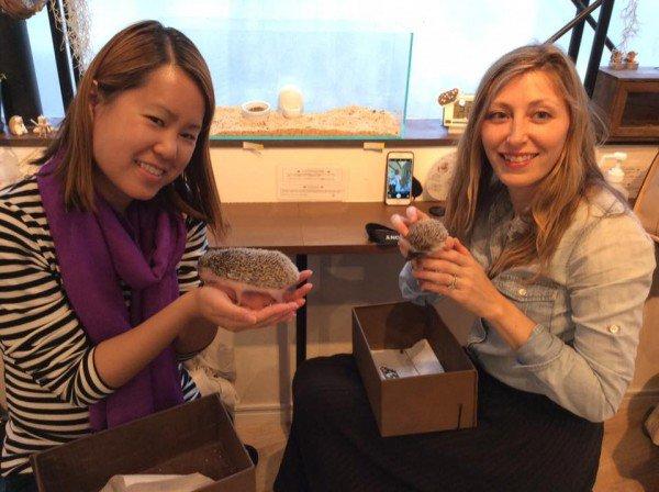 Nhật Bản mở quán cafe nhím đầu tiên trên thế giới - Ảnh 1.