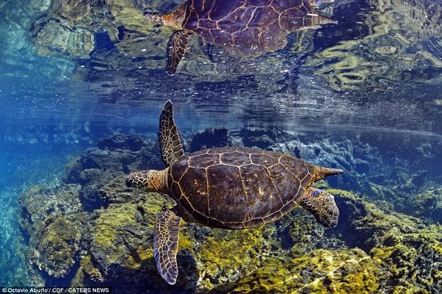 Đẹp mê hồn khoảnh khắc của thế giới đại dương - Ảnh 1.